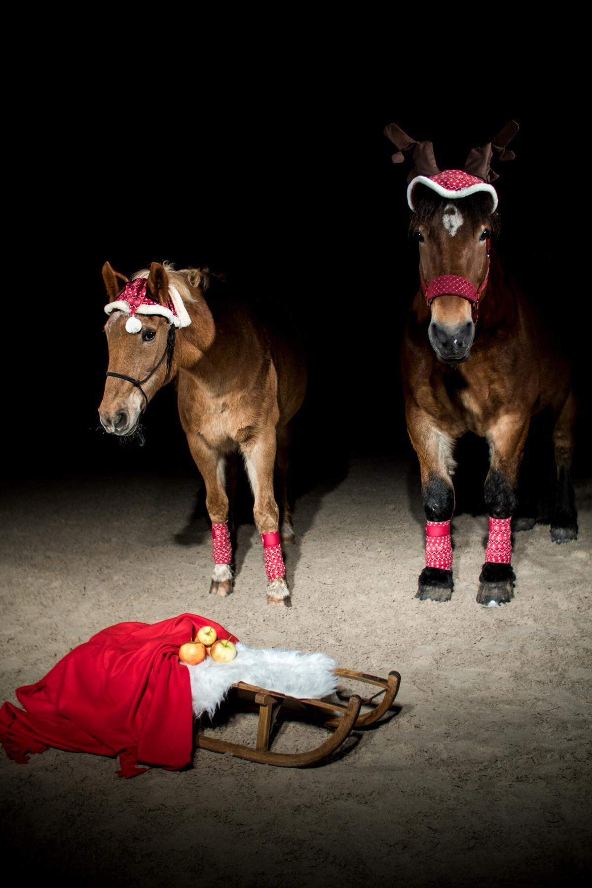 Weihnachten Dunkelshooting Haflingermix Kaltblut