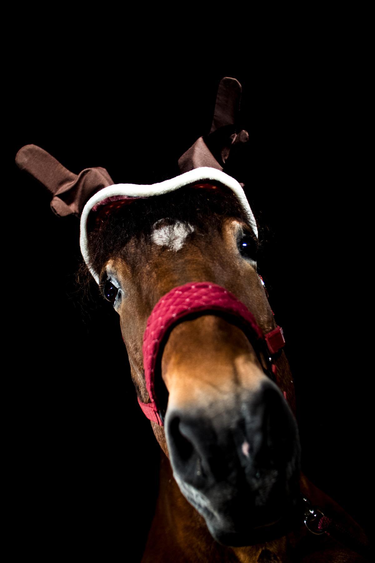 Weihnachten Dunkelshooting Kaltblut
