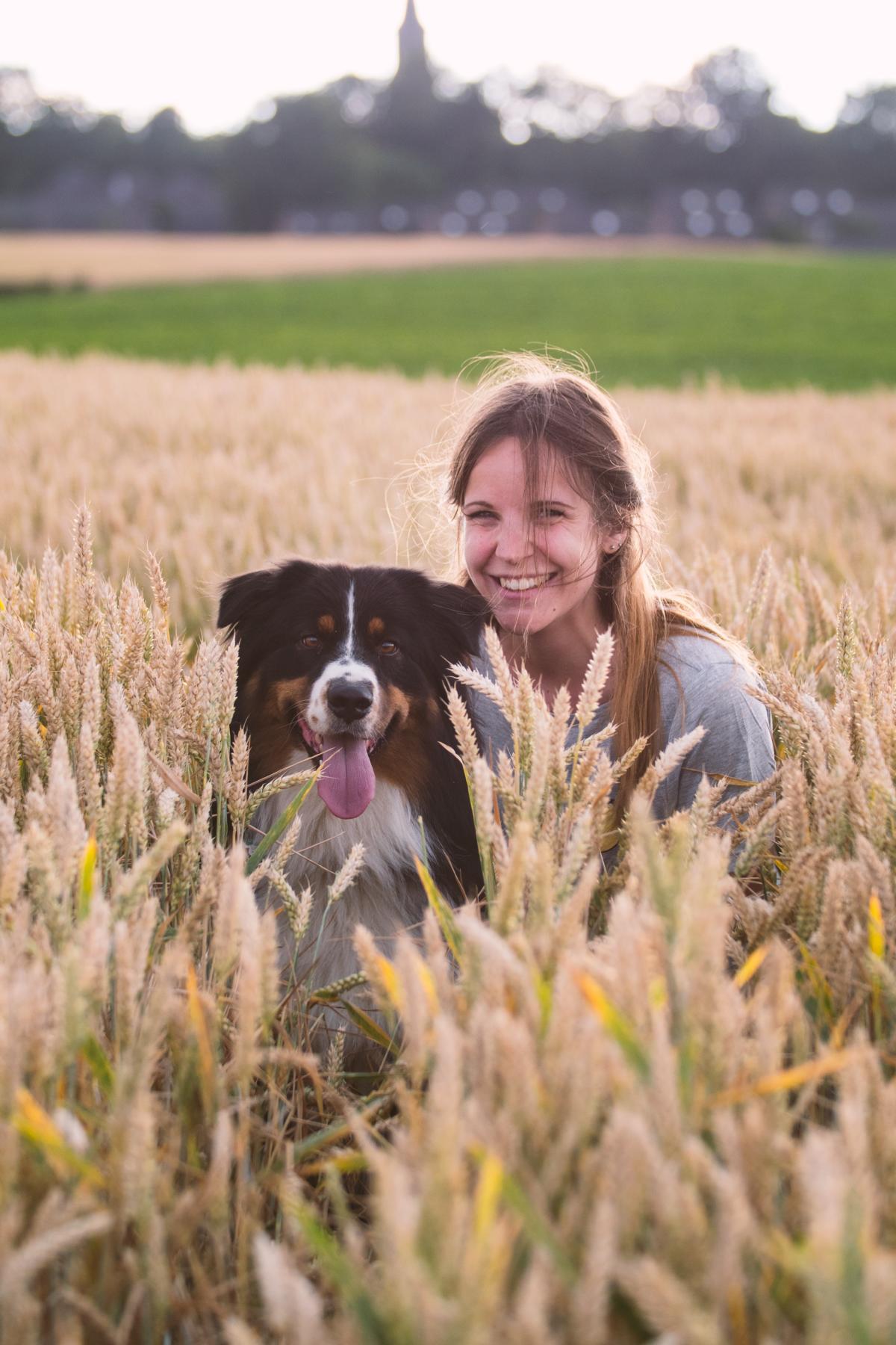 Australian Shepherd Feld Hund Natur