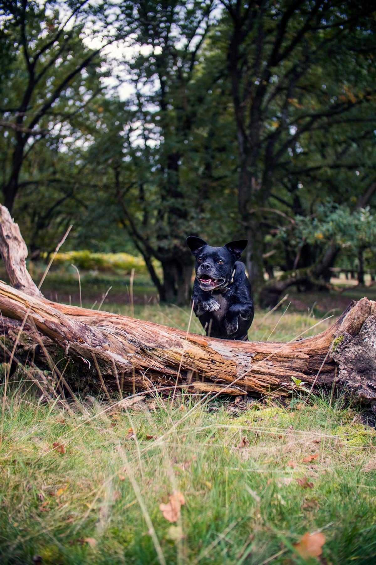 Mix Hund Natur Black Dog