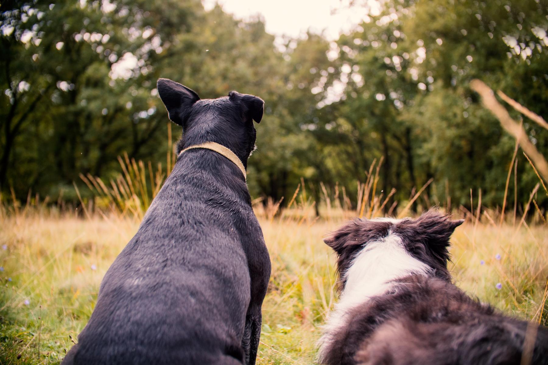 Border Collie Mix Black Dog Hund Natur