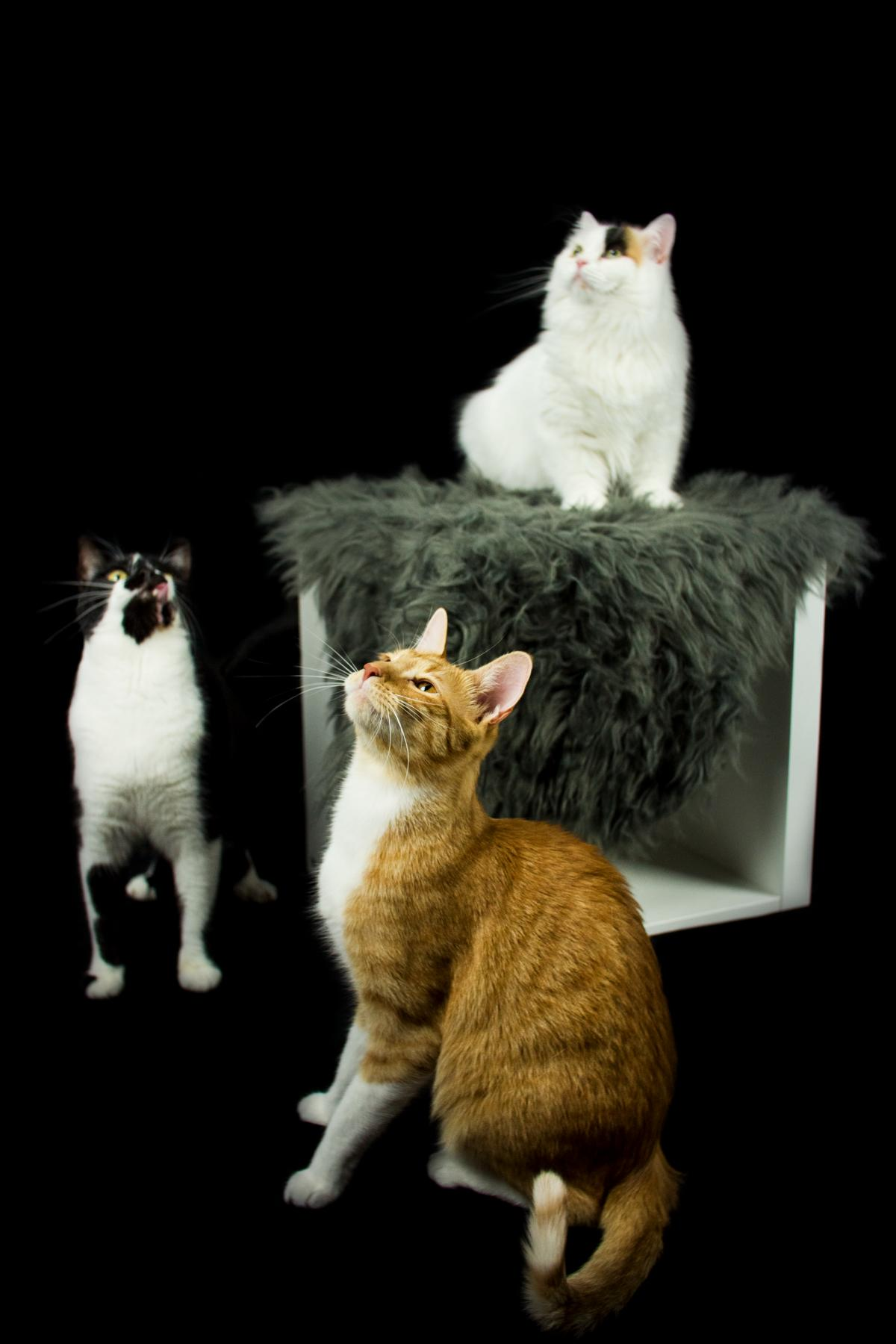 Dreierlei Katze Studio