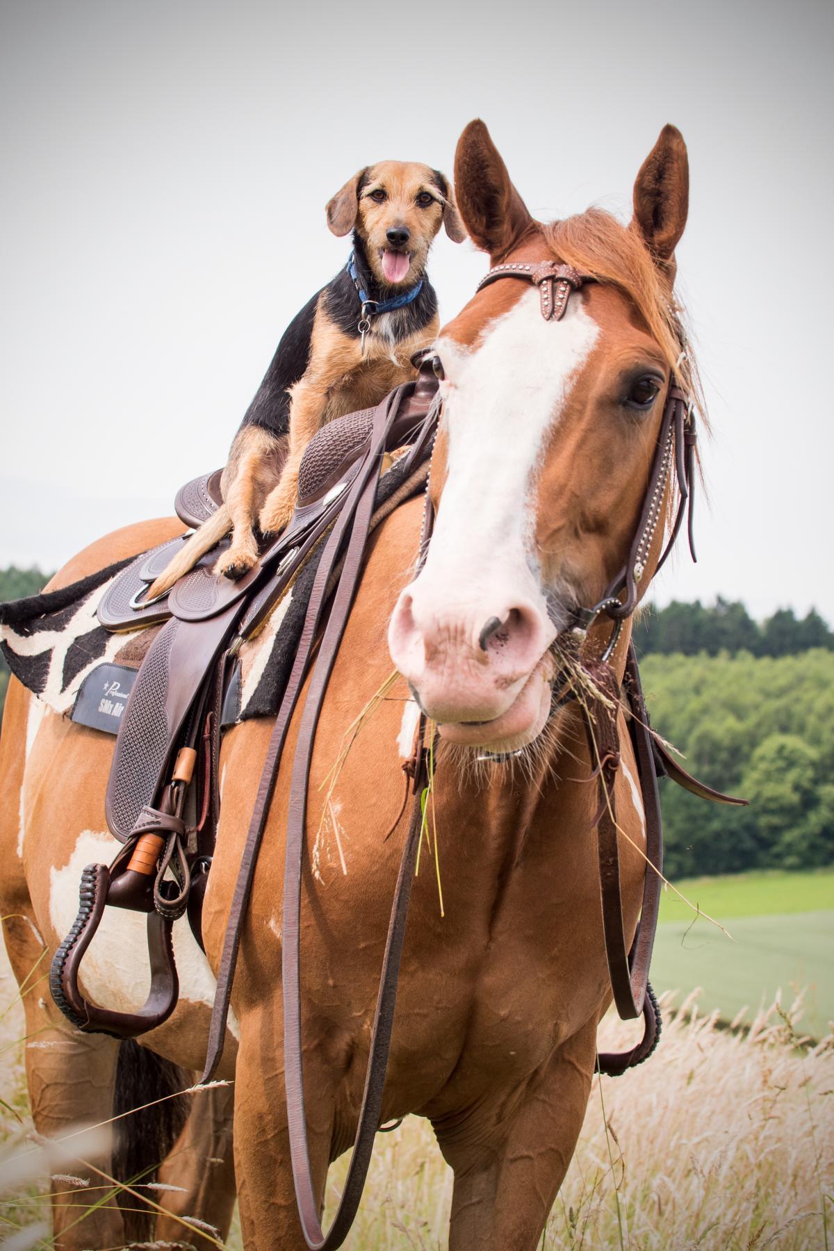 Dog Horse Quarter Horse Animalfriends